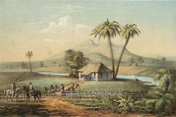 """Tobacco Farm"""
